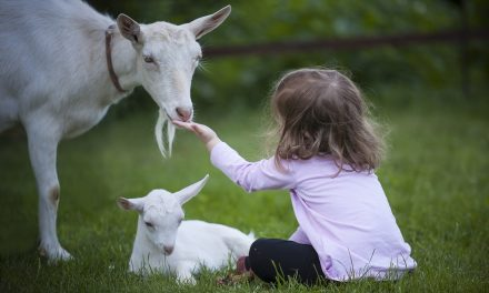 Les animaux et les enfants