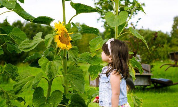 Pour occuper vos enfants, laissez la nature les inspirer !