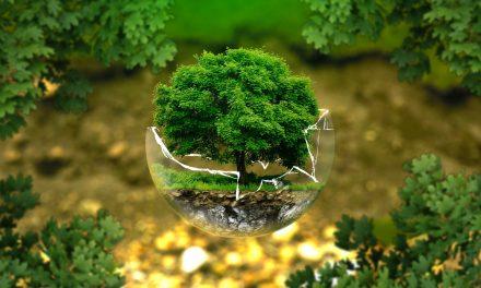 Offrez LE cadeau eco-friendly par excellence grâce à Reforest'action